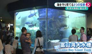 魚津水族館2